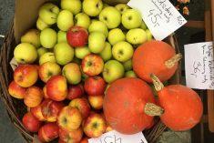 Ovoce a zelenina z Schauerových sadůjpeg